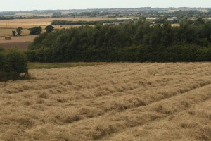 North Meadow cut for hay Photo by Su Haselton