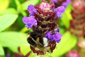 Self Heal Photo by Ree Payne