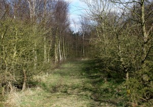 North Wood in March Sunshine Photo by Su Haselton