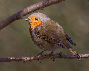 Round Robin Photo by Mark Walters