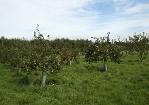 Part of the Orchard Photo by Su Haselton