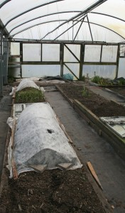 New raised beds in Polytunnel Photo by Su Haselton