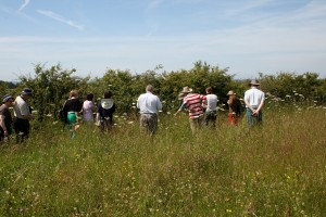 Wildflower Walk in 5 Acre Meadow Photo by Su Haselton