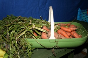 Freshly dug carrots from our 'Veg Plot' for sale Photo by Su Haselton