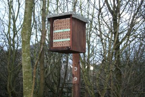 New insect house from recycled rubbish Photo by Su Haselton