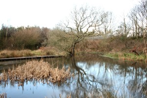 Seldom Pond on a cold January day Photo by Su Haselton