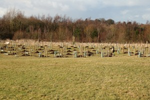 Holes dug ready for the new apple trees Photo by Su Haselton