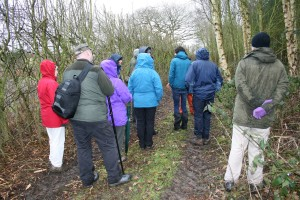 Sunday guided walk in Bluebell Wood Photo by Su Haselton