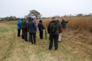 Sunday guided walk - visiting one of the reed beds Photo by Su Haselton