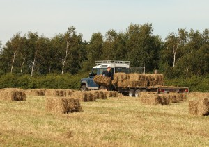 Collecting Hay Bales Photo by Su Haselton