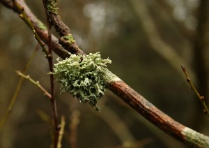 Lichen in Cabin Wood Photo by Su Haselton