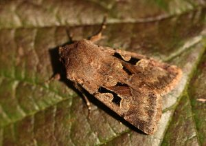 Hebrew Character Photo by Su Haselton