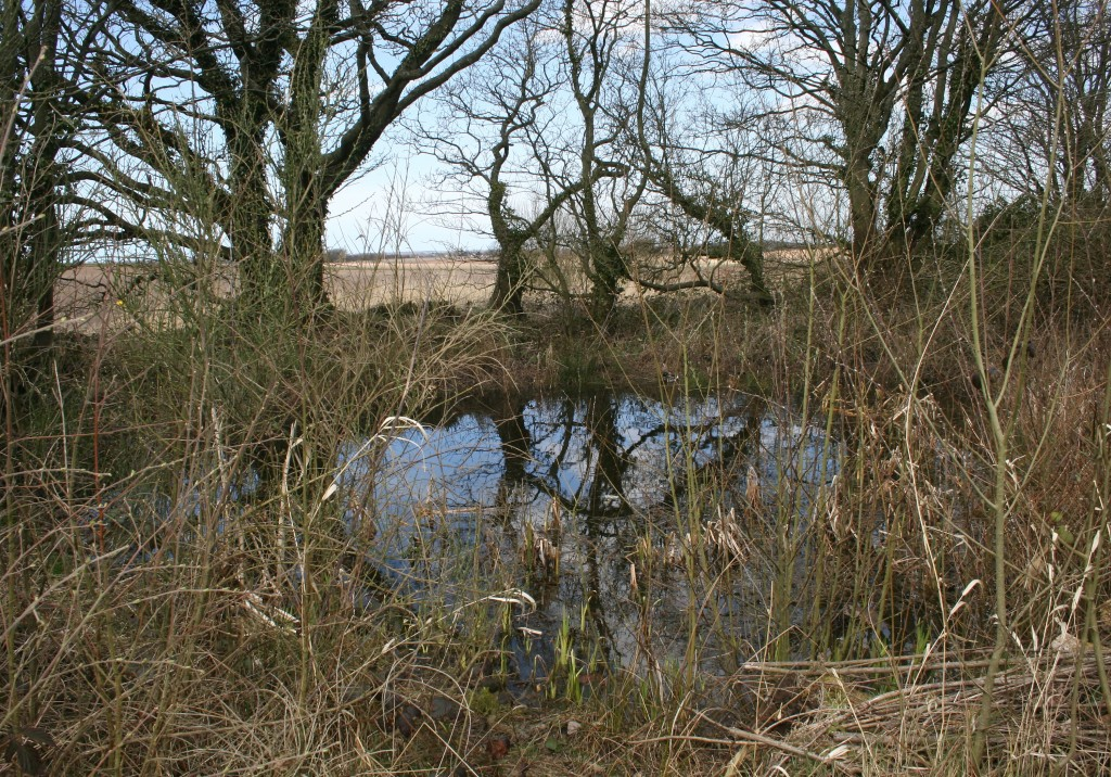 Marl Pit Pond Photo by Su Haselton