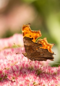 Comma showing its Punctuation Mark Photo by Su Haselton