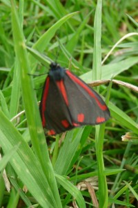 Cinnabar Photo by Liz Brotherstone