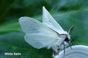 White Satin Photo by Liz Brotherstone