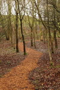 Newly wood-chipped path to Heron Hide in Cabin Wood Photo by Su Haselton