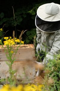 Brian starting to inspect the hive Photo by Su Haselton